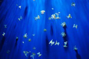 Genua-oceanarium